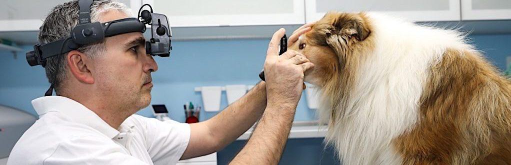 Klinicke oftalmologicke vysetrenie psov